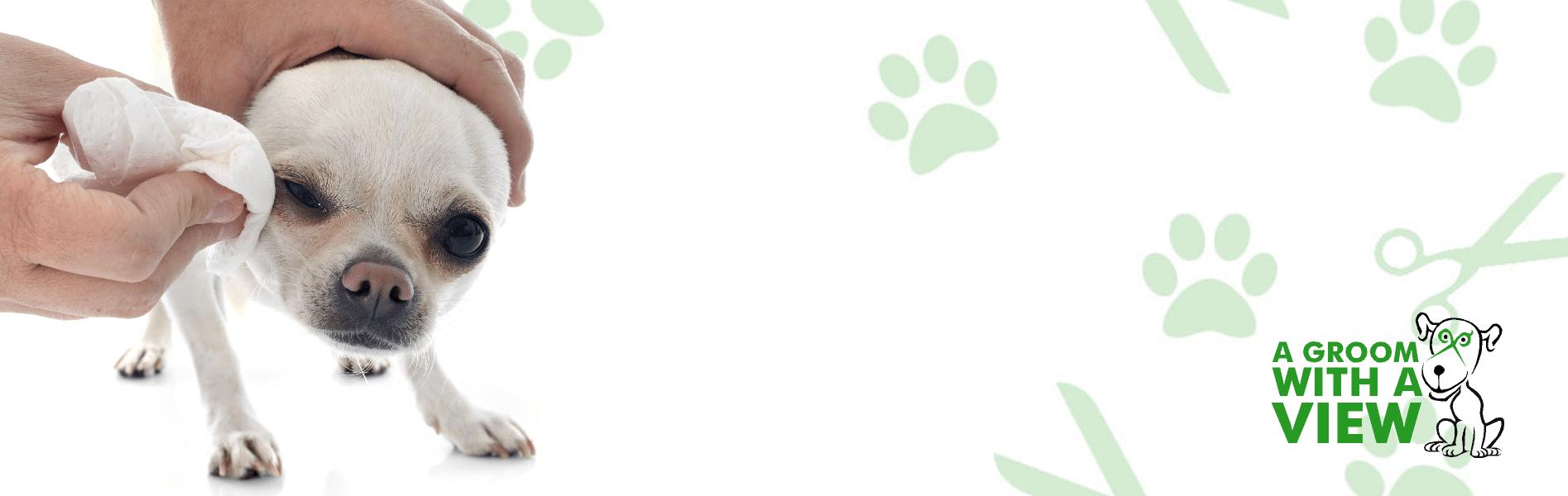 dog eye clean lincoln