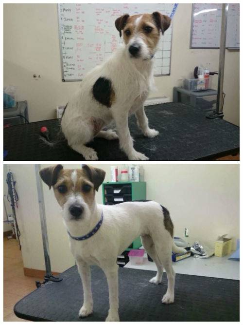 dog grooming in lincoln