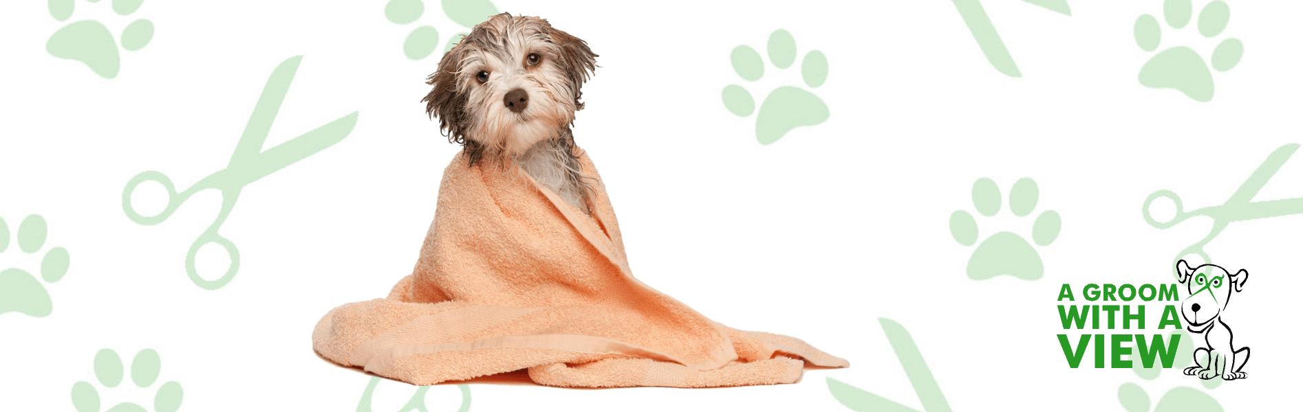 dog grooming lincoln 4