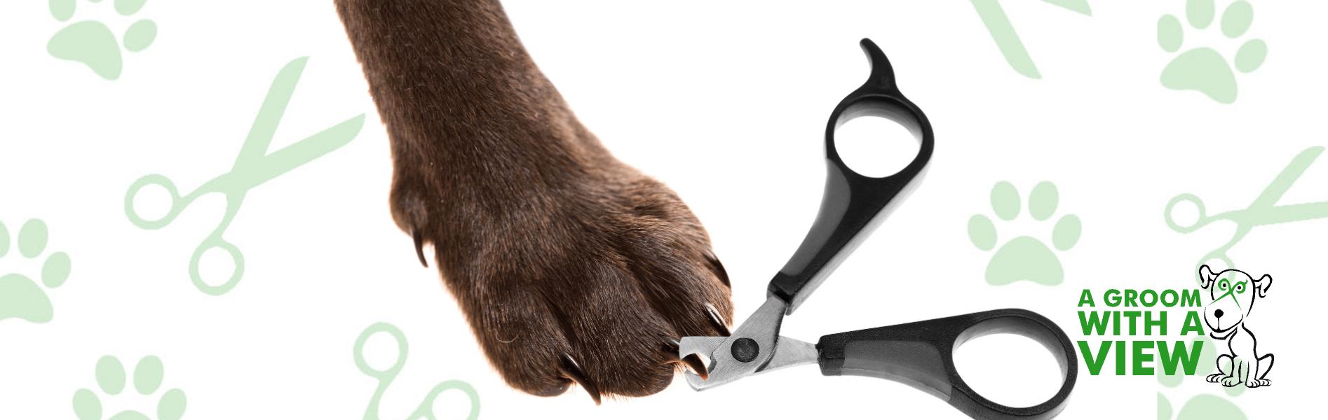 dog grooming-nail clipping