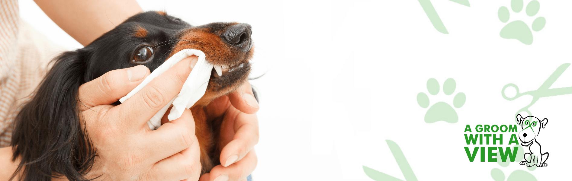 dog teeth clean lincoln