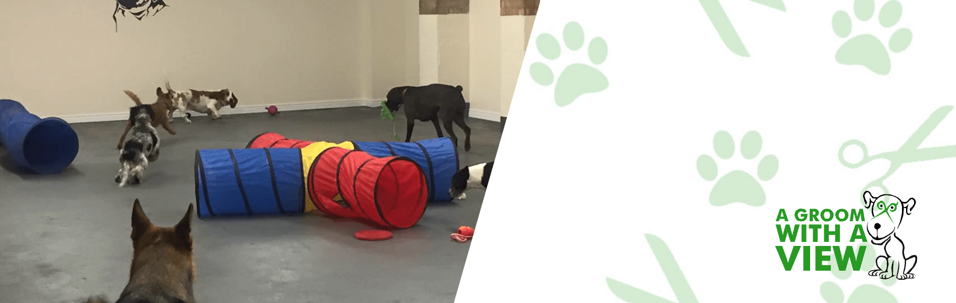 dog-day-care-linclon