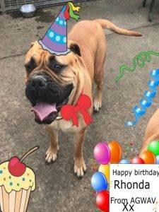 doggy birthday parties
