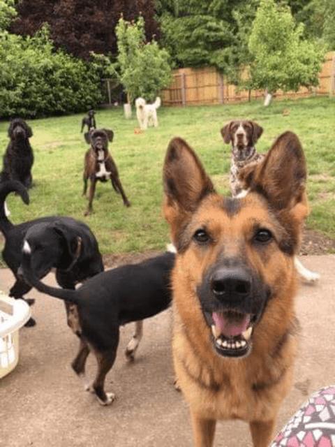 doggy birthday party 2