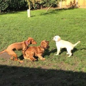 puppy play class 2