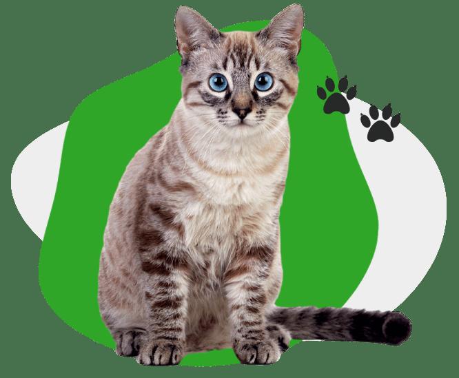 AGAWAV cat grooming