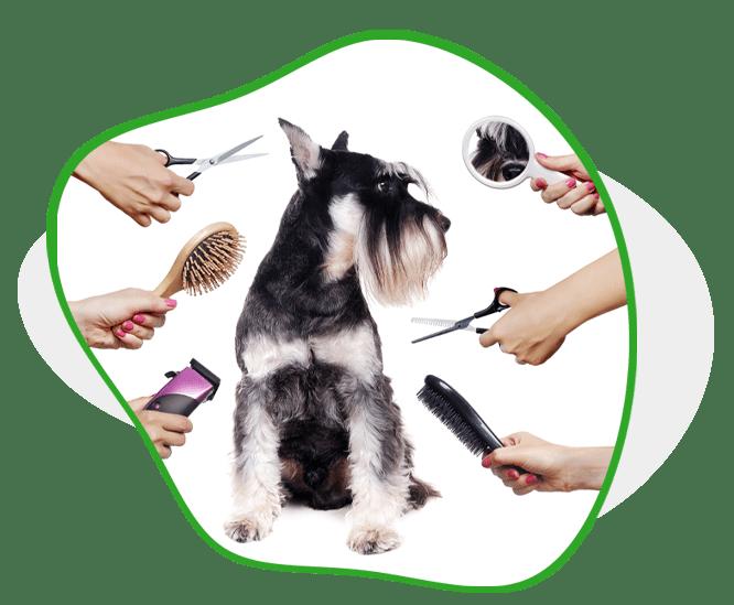 AGAWAV dog grooming