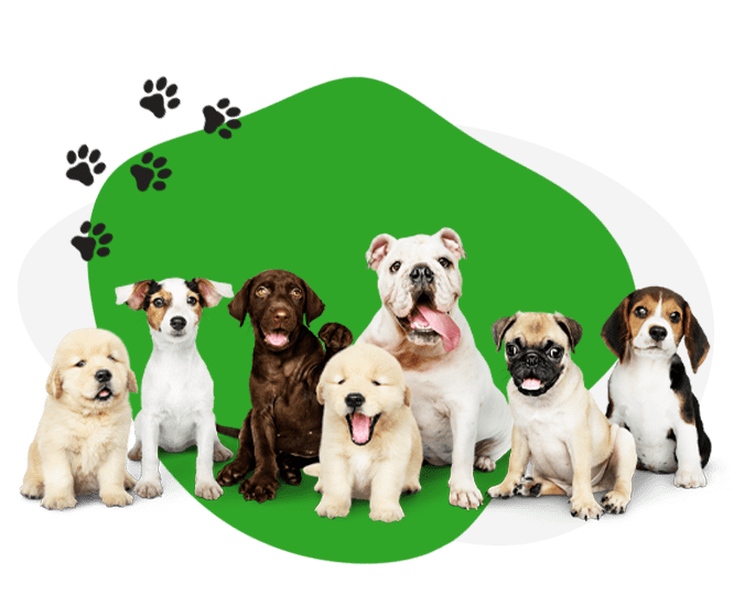 AGAWAV doggy day care