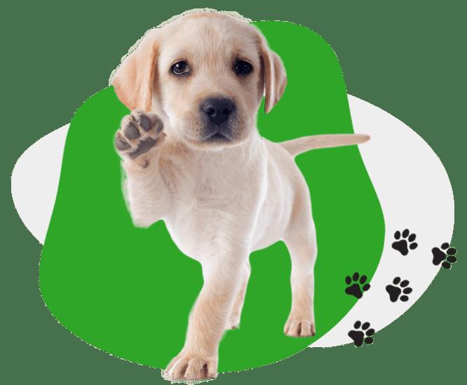 AGAWAV puppy grooming