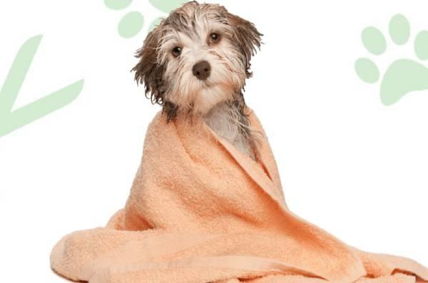 dog-grooming-bathing-linclon